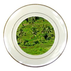Greenery Paddy Fields Rice Crops Porcelain Plates