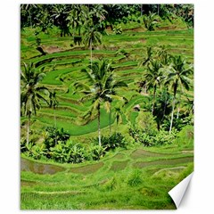 Greenery Paddy Fields Rice Crops Canvas 8  X 10