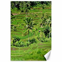 Greenery Paddy Fields Rice Crops Canvas 12  X 18