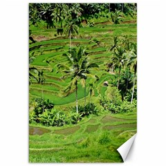 Greenery Paddy Fields Rice Crops Canvas 20  X 30