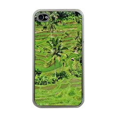 Greenery Paddy Fields Rice Crops Apple Iphone 4 Case (clear)
