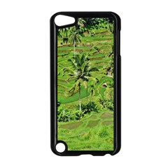 Greenery Paddy Fields Rice Crops Apple Ipod Touch 5 Case (black)