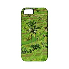 Greenery Paddy Fields Rice Crops Apple Iphone 5 Classic Hardshell Case (pc+silicone)