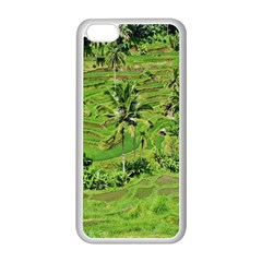 Greenery Paddy Fields Rice Crops Apple Iphone 5c Seamless Case (white)