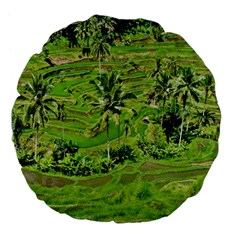 Greenery Paddy Fields Rice Crops Large 18  Premium Flano Round Cushions