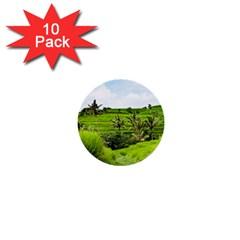 Bali Rice Terraces Landscape Rice 1  Mini Buttons (10 Pack)