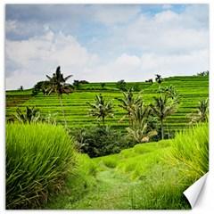 Bali Rice Terraces Landscape Rice Canvas 16  X 16