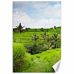Bali Rice Terraces Landscape Rice Canvas 20  X 30