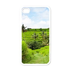 Bali Rice Terraces Landscape Rice Apple Iphone 4 Case (white)