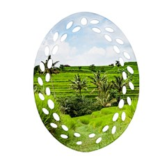 Bali Rice Terraces Landscape Rice Oval Filigree Ornament (two Sides)