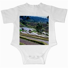 Rice Terrace Rice Fields Infant Creepers