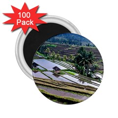 Rice Terrace Rice Fields 2 25  Magnets (100 Pack)