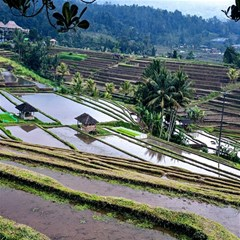 Rice Terrace Rice Fields Magic Photo Cubes
