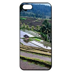 Rice Terrace Rice Fields Apple Iphone 5 Seamless Case (black)