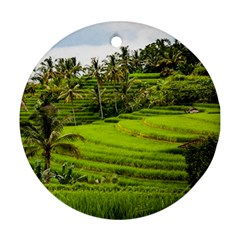 Rice Terrace Terraces Ornament (round)