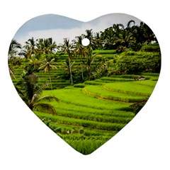 Rice Terrace Terraces Ornament (heart)