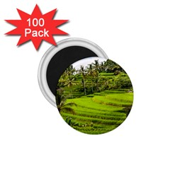 Rice Terrace Terraces 1 75  Magnets (100 Pack)