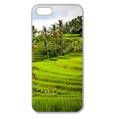 Rice Terrace Terraces Apple Seamless Iphone 5 Case (clear)