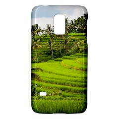 Rice Terrace Terraces Galaxy S5 Mini