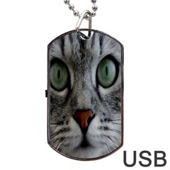 Cat Face Eyes Gray Fluffy Cute Animals Dog Tag Usb Flash (one Side)