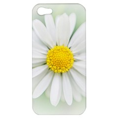 Art Daisy Flower Art Flower Deco Apple Iphone 5 Hardshell Case
