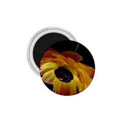 Ranunculus Yellow Orange Blossom 1 75  Magnets