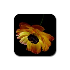Ranunculus Yellow Orange Blossom Rubber Square Coaster (4 Pack)
