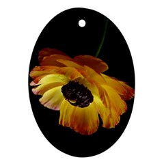Ranunculus Yellow Orange Blossom Oval Ornament (two Sides)