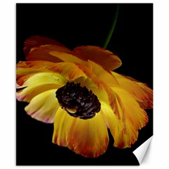 Ranunculus Yellow Orange Blossom Canvas 8  X 10