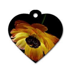 Ranunculus Yellow Orange Blossom Dog Tag Heart (two Sides)