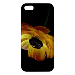 Ranunculus Yellow Orange Blossom Apple Iphone 5 Premium Hardshell Case