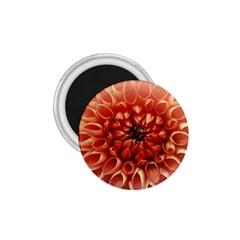 Dahlia Flower Joy Nature Luck 1 75  Magnets