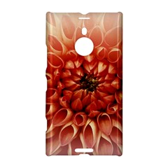Dahlia Flower Joy Nature Luck Nokia Lumia 1520