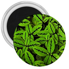 Nature Print Pattern 3  Magnets