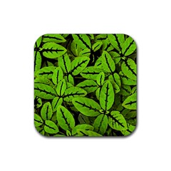 Nature Print Pattern Rubber Square Coaster (4 Pack)