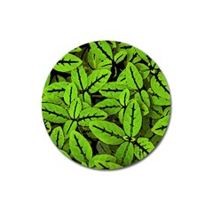 Nature Print Pattern Magnet 3  (round)