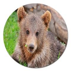 Baby Bear Animals Magnet 5  (round)