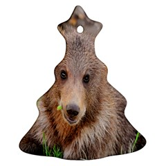 Baby Bear Animals Ornament (christmas Tree)