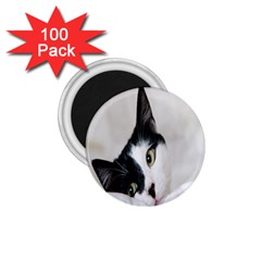 Cat Face Cute Black White Animals 1 75  Magnets (100 Pack)