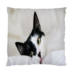 Cat Face Cute Black White Animals Standard Cushion Case (two Sides)