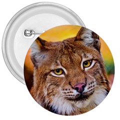 Tiger Beetle Lion Tiger Animals 3  Buttons