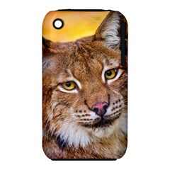 Tiger Beetle Lion Tiger Animals Iphone 3s/3gs