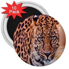 Tiger Beetle Lion Tiger Animals Leopard 3  Magnets (10 Pack)