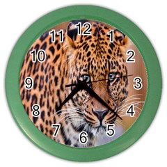 Tiger Beetle Lion Tiger Animals Leopard Color Wall Clocks