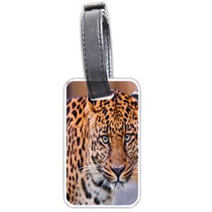 Tiger Beetle Lion Tiger Animals Leopard Luggage Tags (one Side)