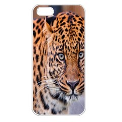 Tiger Beetle Lion Tiger Animals Leopard Apple Iphone 5 Seamless Case (white)