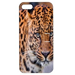 Tiger Beetle Lion Tiger Animals Leopard Apple Iphone 5 Hardshell Case With Stand
