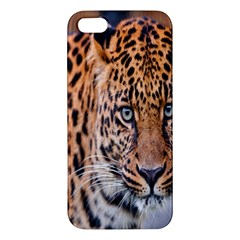Tiger Beetle Lion Tiger Animals Leopard Apple Iphone 5 Premium Hardshell Case