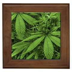 Marijuana Plants Pattern Framed Tiles