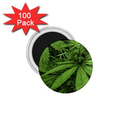 Marijuana Plants Pattern 1 75  Magnets (100 Pack)